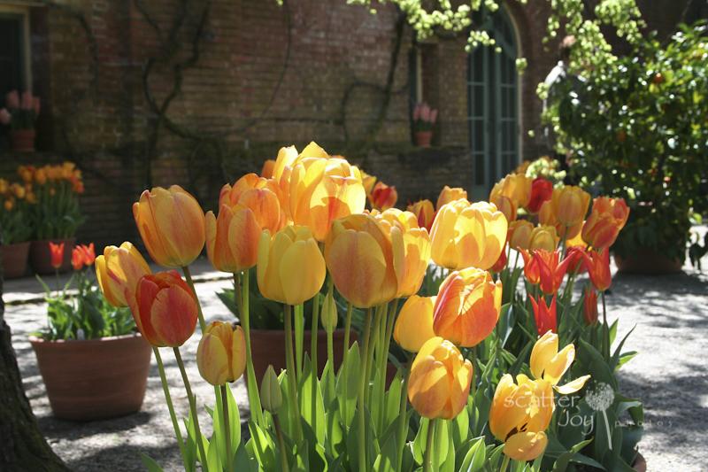 4-1-12_Filoli-Tulips-9 12