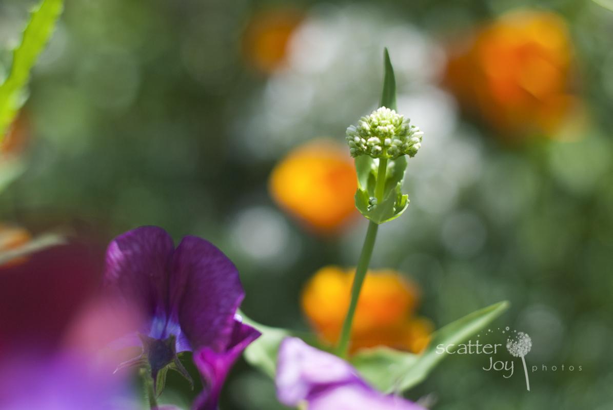 5-25-12_Gamble-Gardens-2