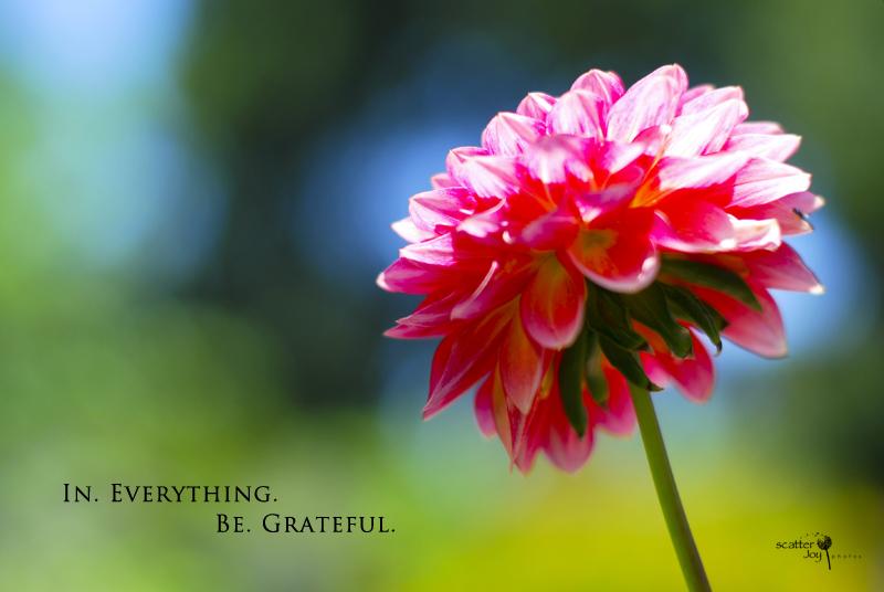 6-25-12_Gratefulness-3