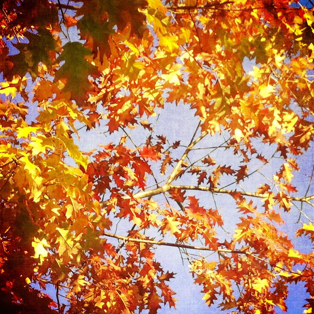 Scatter Joy Photos Autumn Leaves 10