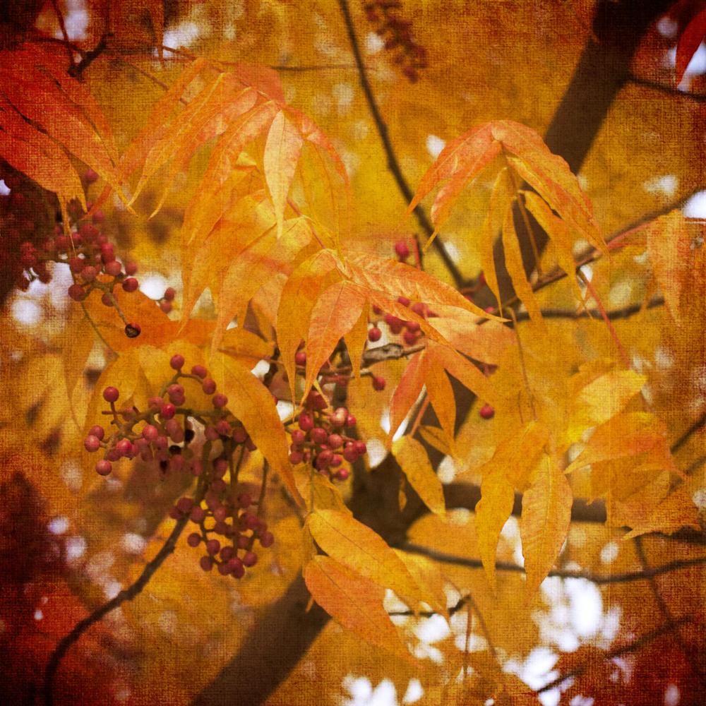 Scatter Joy Photos Autumn Leaves 12