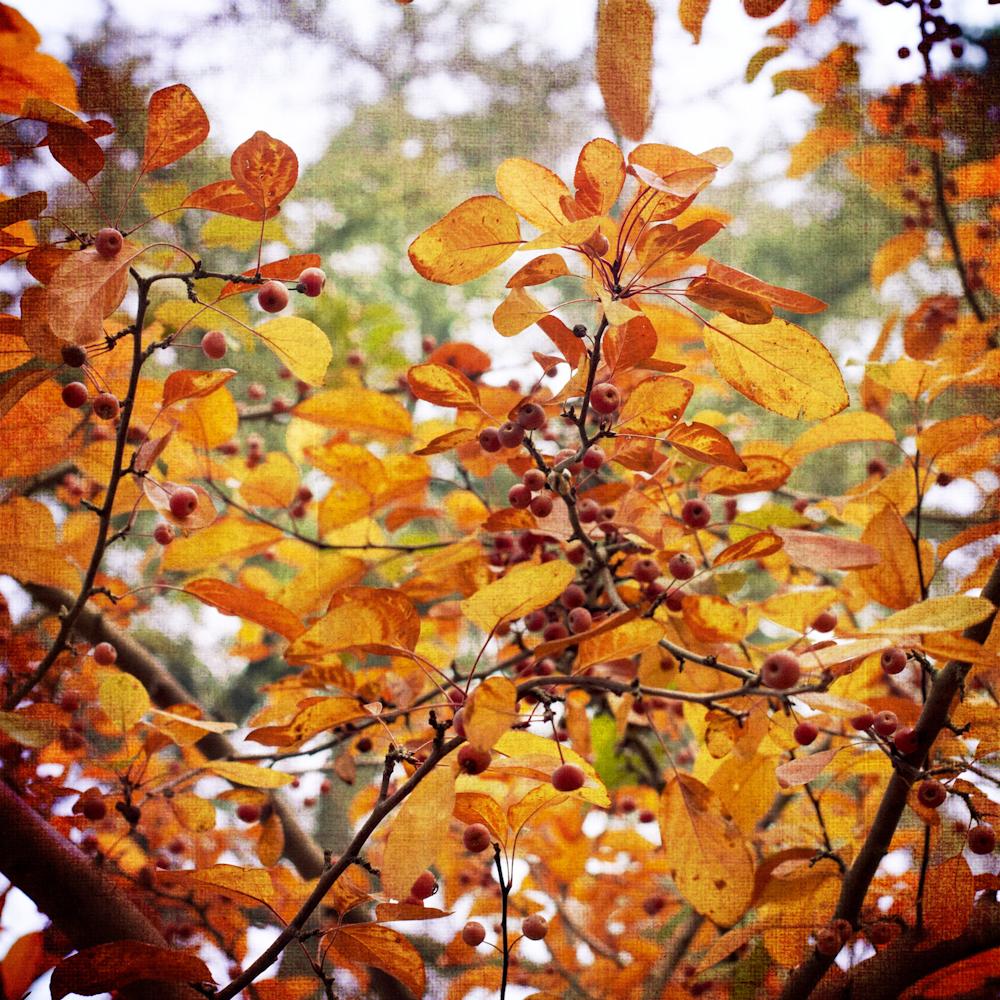 Scatter Joy Photos Autumn Leaves 2