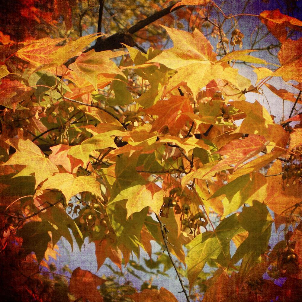 Scatter Joy Photos Autumn Leaves 4