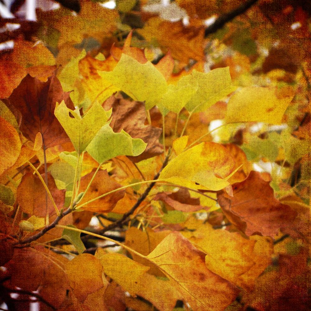 Scatter Joy Photos Autumn Leaves 6
