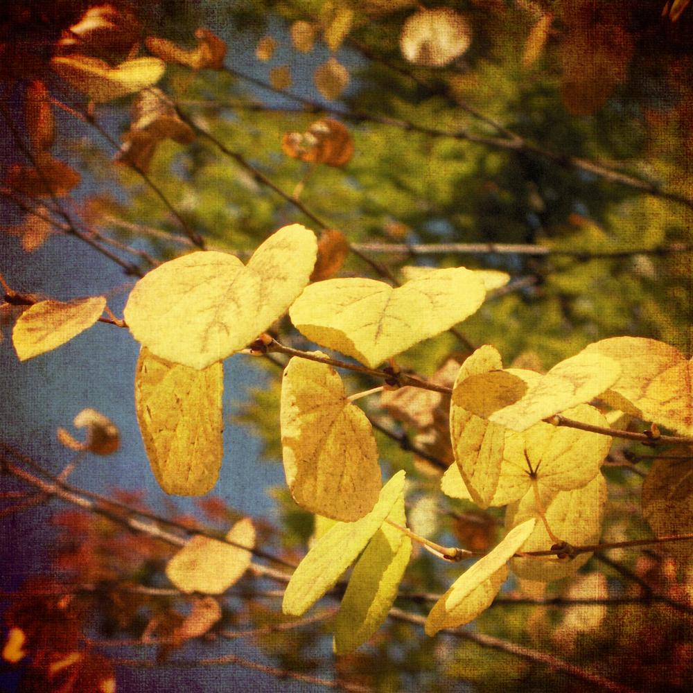 Scatter Joy Photos Autumn Leaves 7