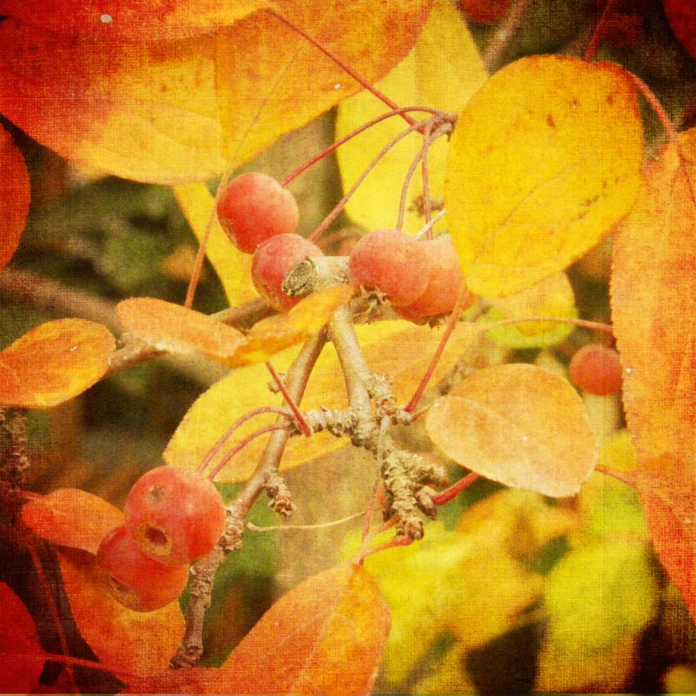 Scatter Joy Photos Autumn Leaves 8