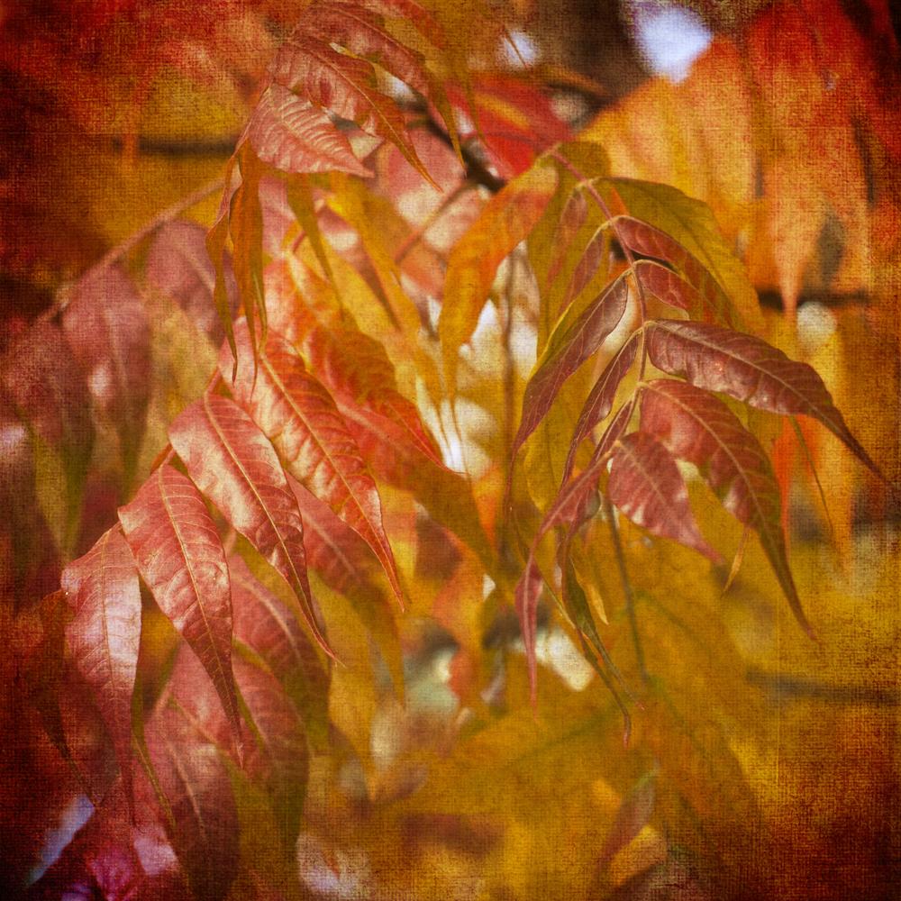 Scatter Joy Photos Autumn Leaves 9