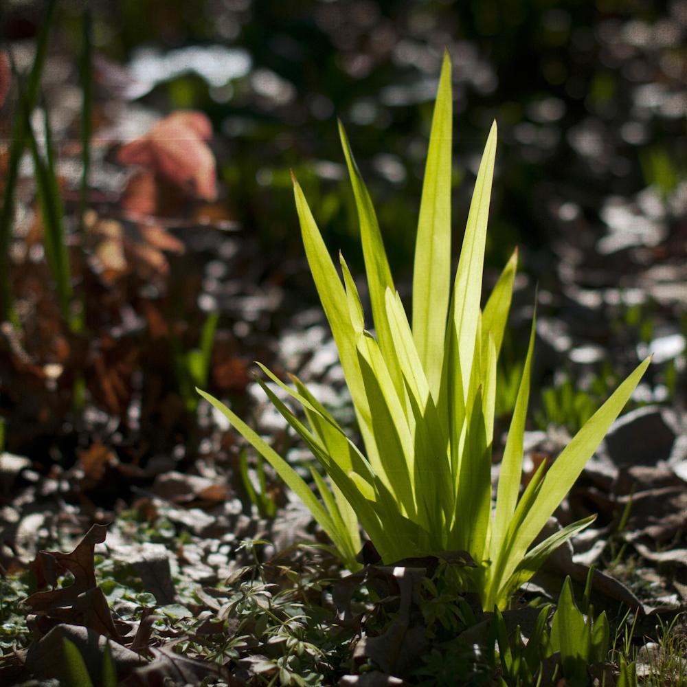 2-21-13_Gamble-Gardens-Spring-11