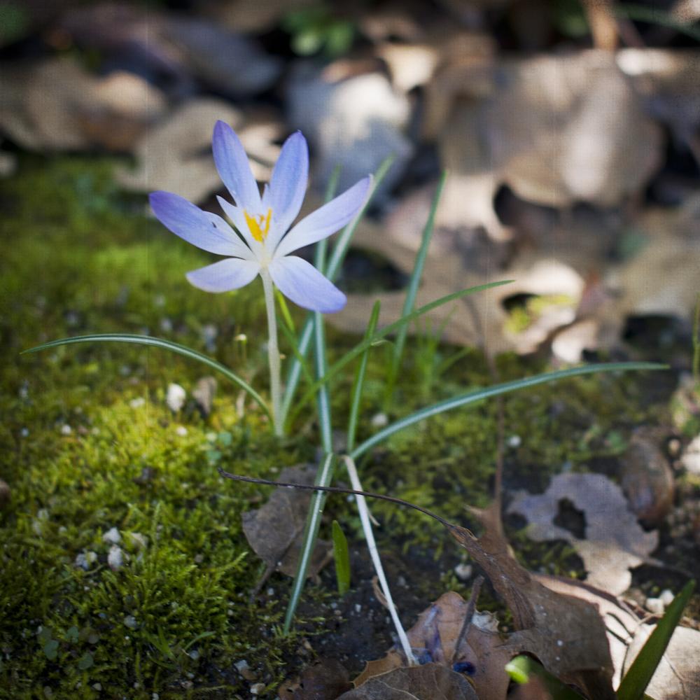 2-21-13_Gamble-Gardens-Spring-2