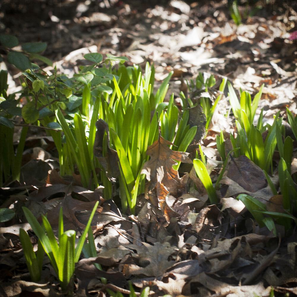 2-21-13_Gamble-Gardens-Spring-3