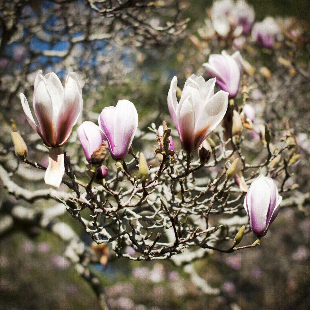 2-21-13_Gamble-Gardens-Spring-4