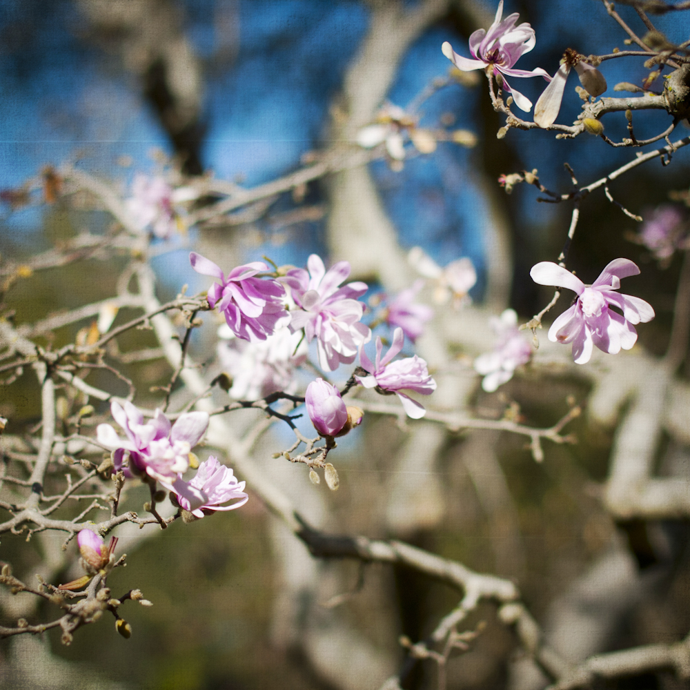 2-21-13_Gamble-Gardens-Spring-5