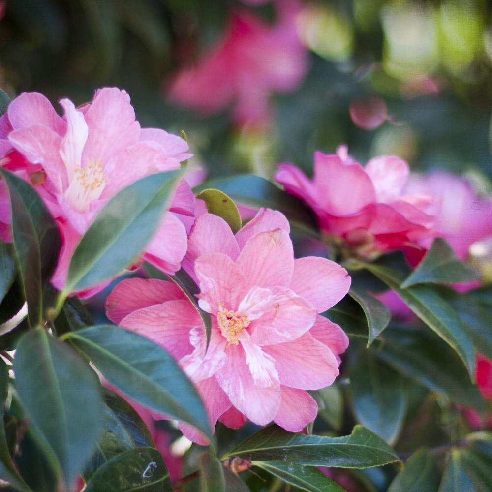 2-21-13_Gamble-Gardens-Spring-6