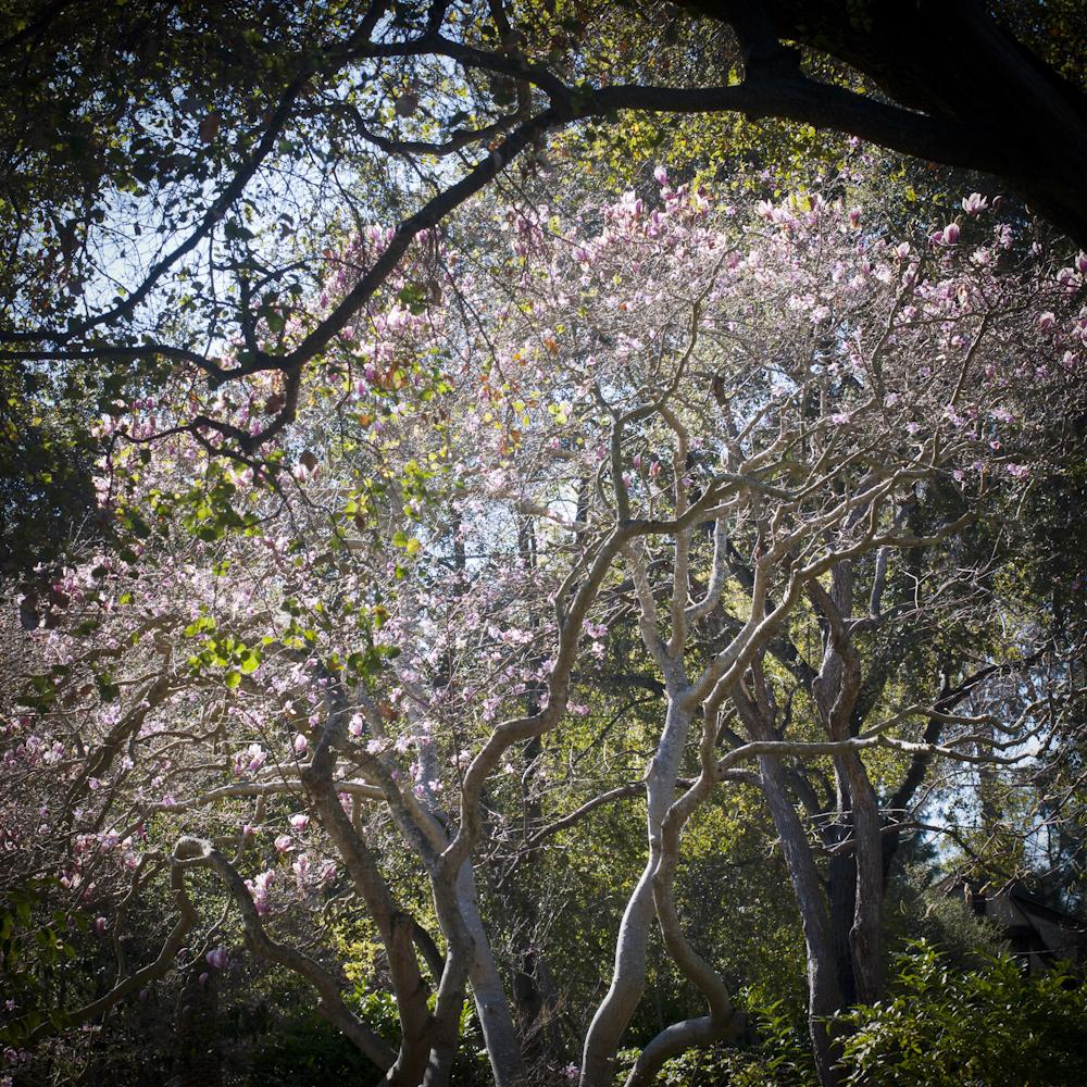 2-21-13_Gamble-Gardens-Spring-7