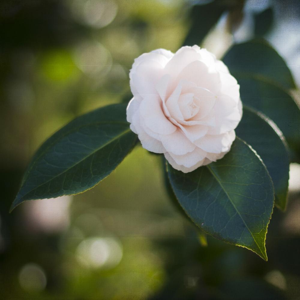 2-21-13_Gamble-Gardens-Spring-8