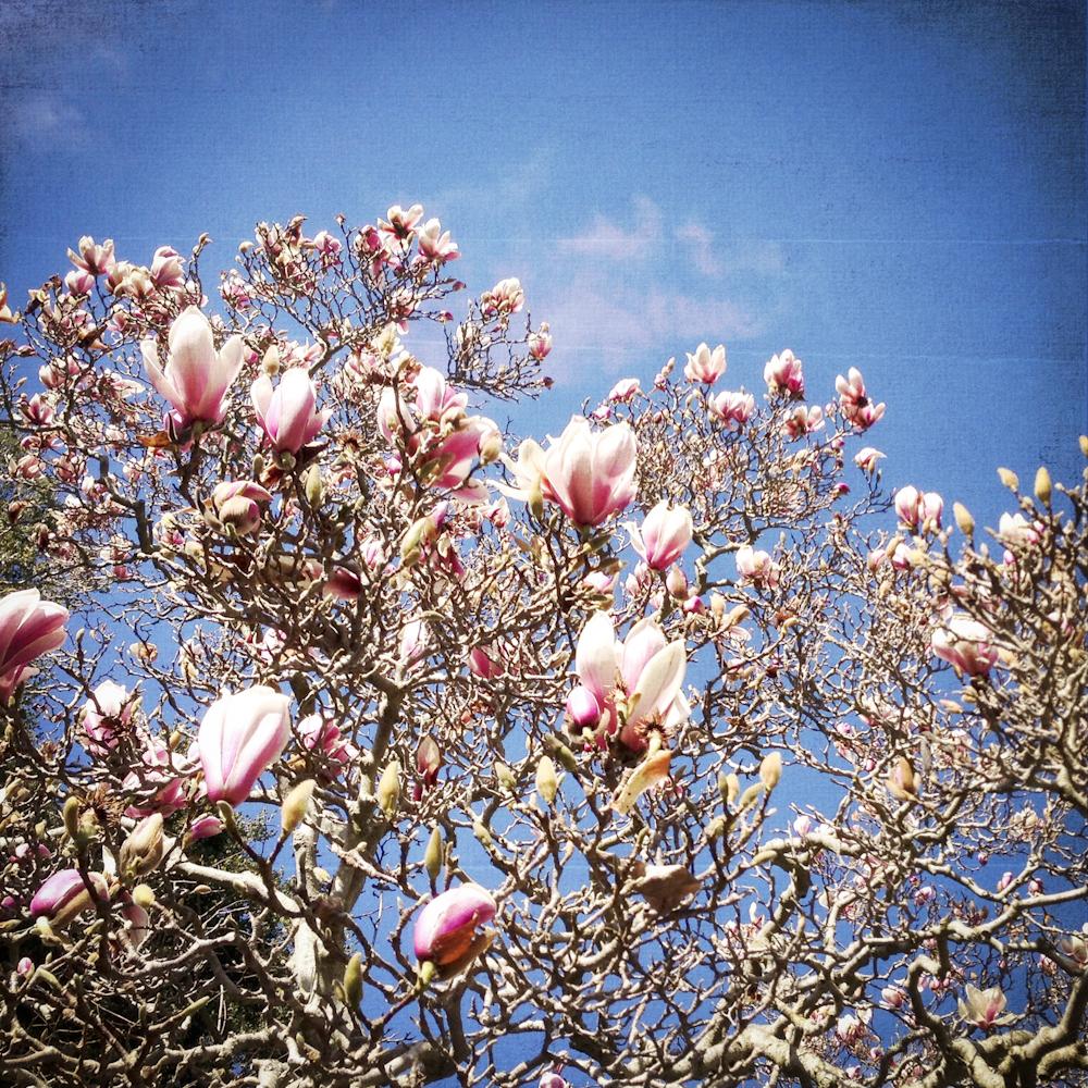 2-21-13_Gamble-Gardens-Spring