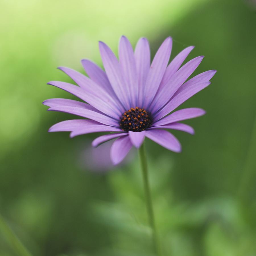 Joy within the Garden