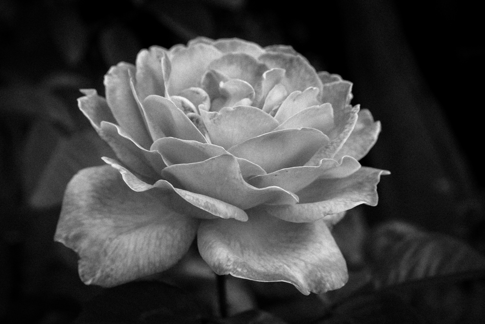 ScatterJoyPhotos_GardenBeauty-13