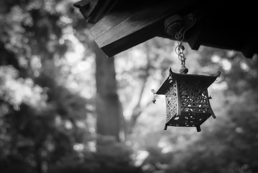 ScatterJoyPhotos_GardenBeauty-16