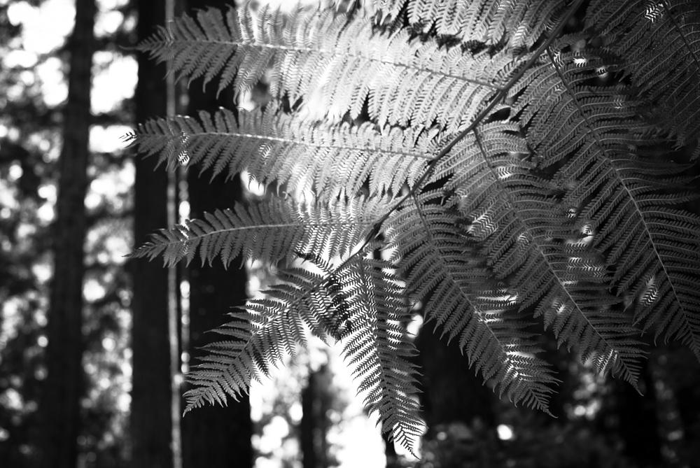 ScatterJoyPhotos_GardenBeauty-5