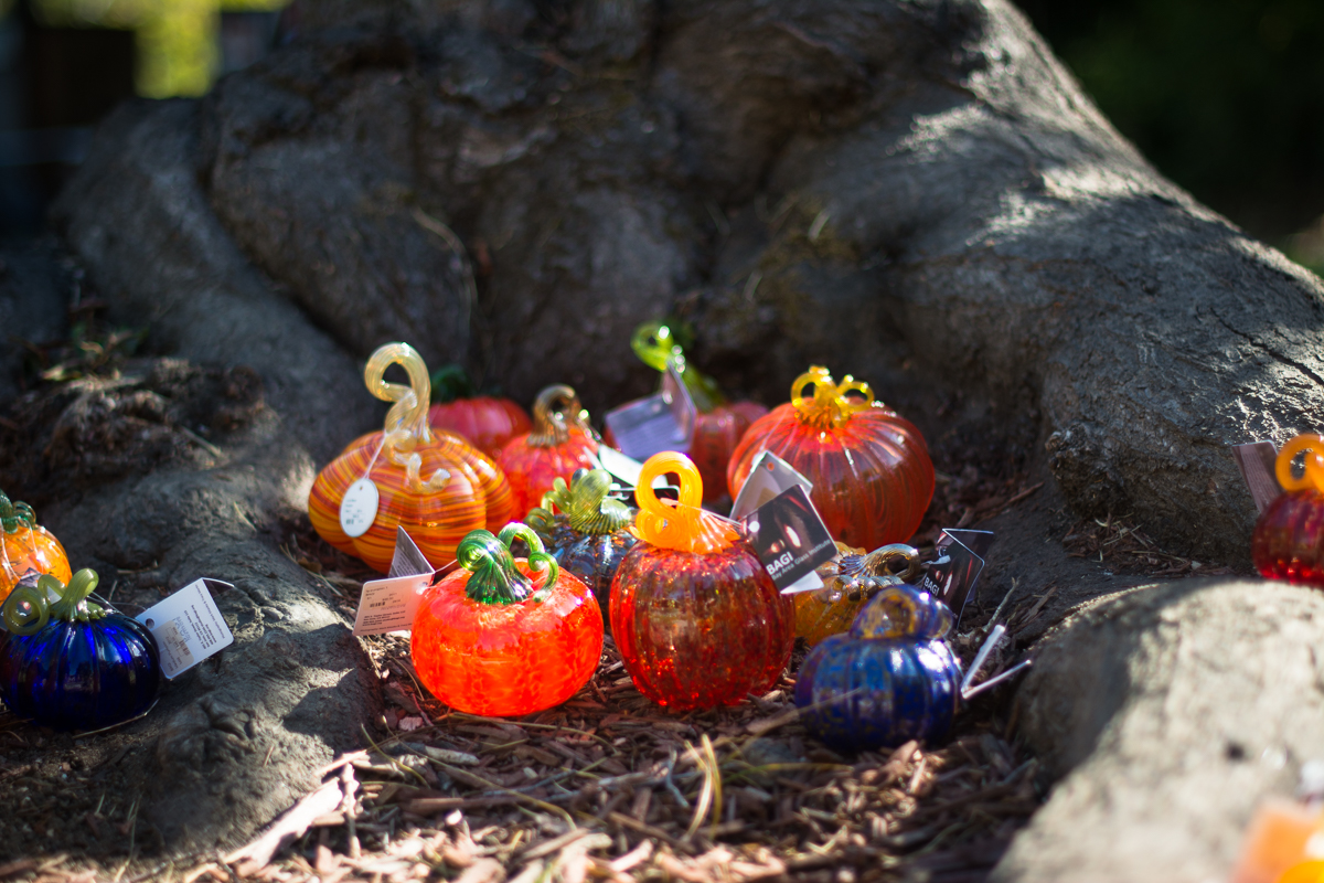 ScatterJoyPhotos_GreatGlassPumpkinPatch-1