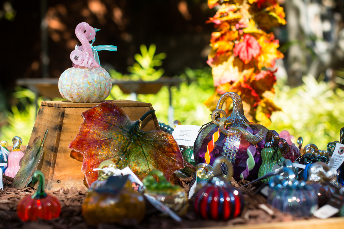 ScatterJoyPhotos_GreatGlassPumpkinPatch-10