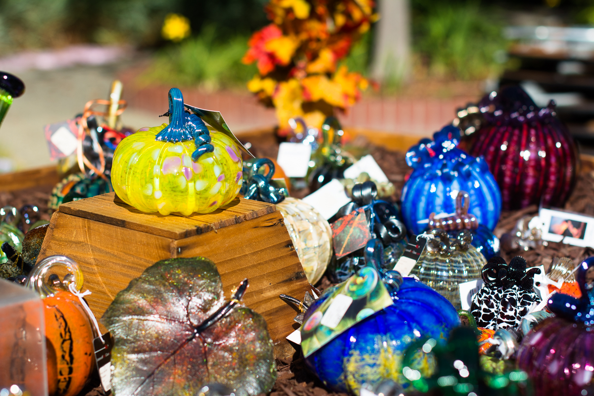 ScatterJoyPhotos_GreatGlassPumpkinPatch-12