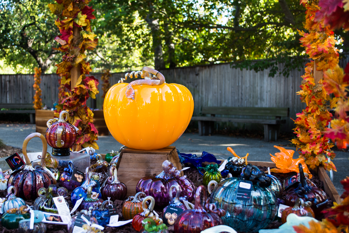 ScatterJoyPhotos_GreatGlassPumpkinPatch-15