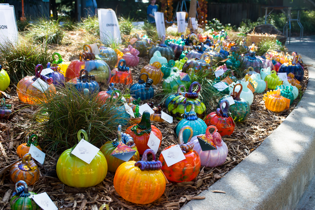 ScatterJoyPhotos_GreatGlassPumpkinPatch-16