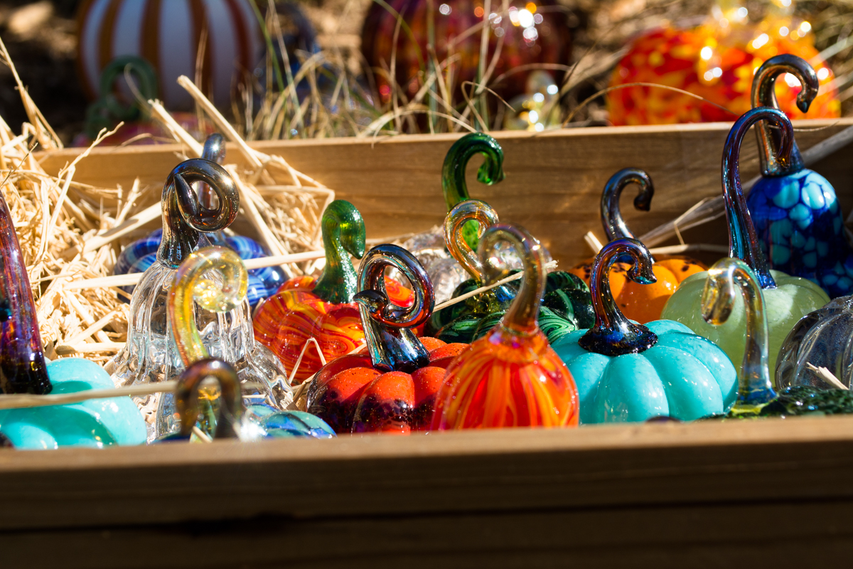 ScatterJoyPhotos_GreatGlassPumpkinPatch-17