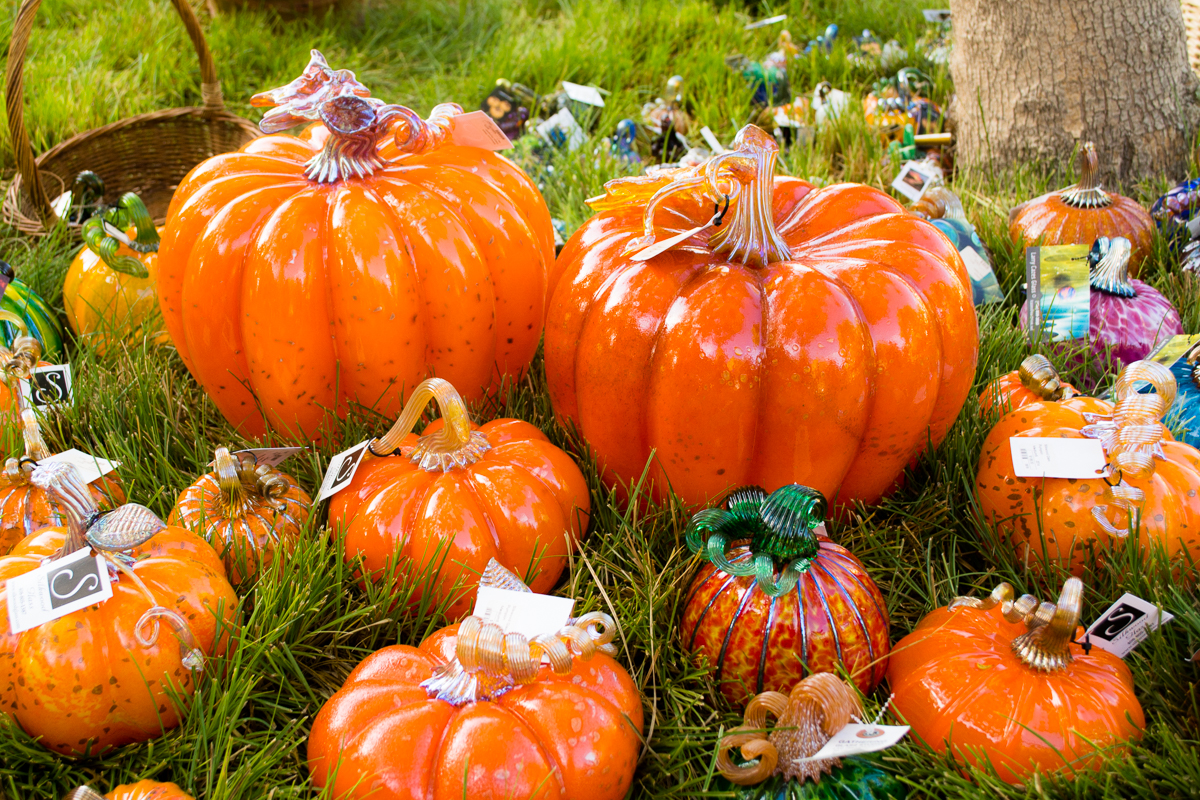 ScatterJoyPhotos_GreatGlassPumpkinPatch-18