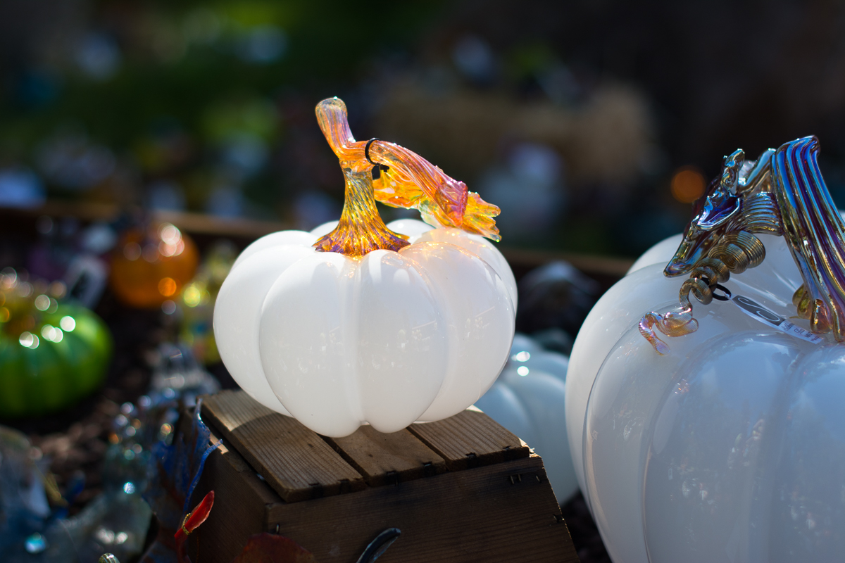 ScatterJoyPhotos_GreatGlassPumpkinPatch-4