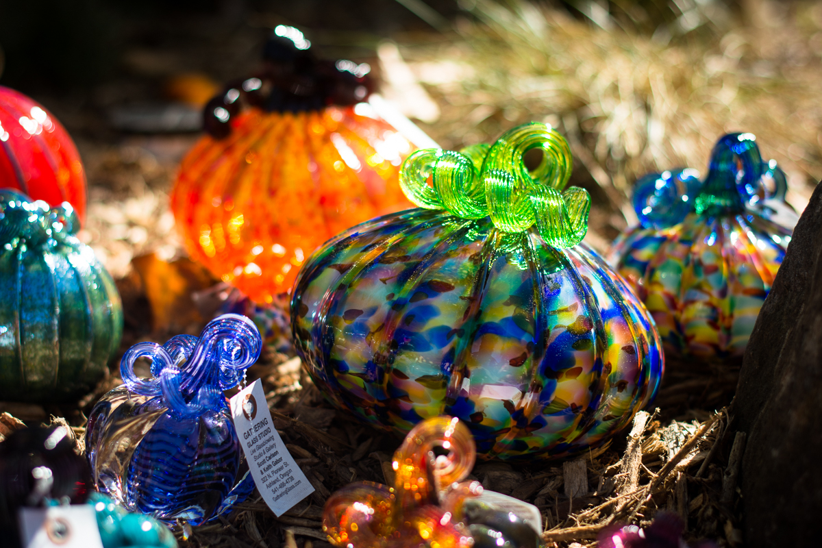 ScatterJoyPhotos_GreatGlassPumpkinPatch-5