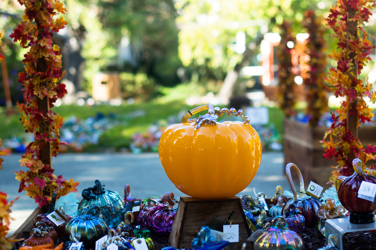 ScatterJoyPhotos_GreatGlassPumpkinPatch-7