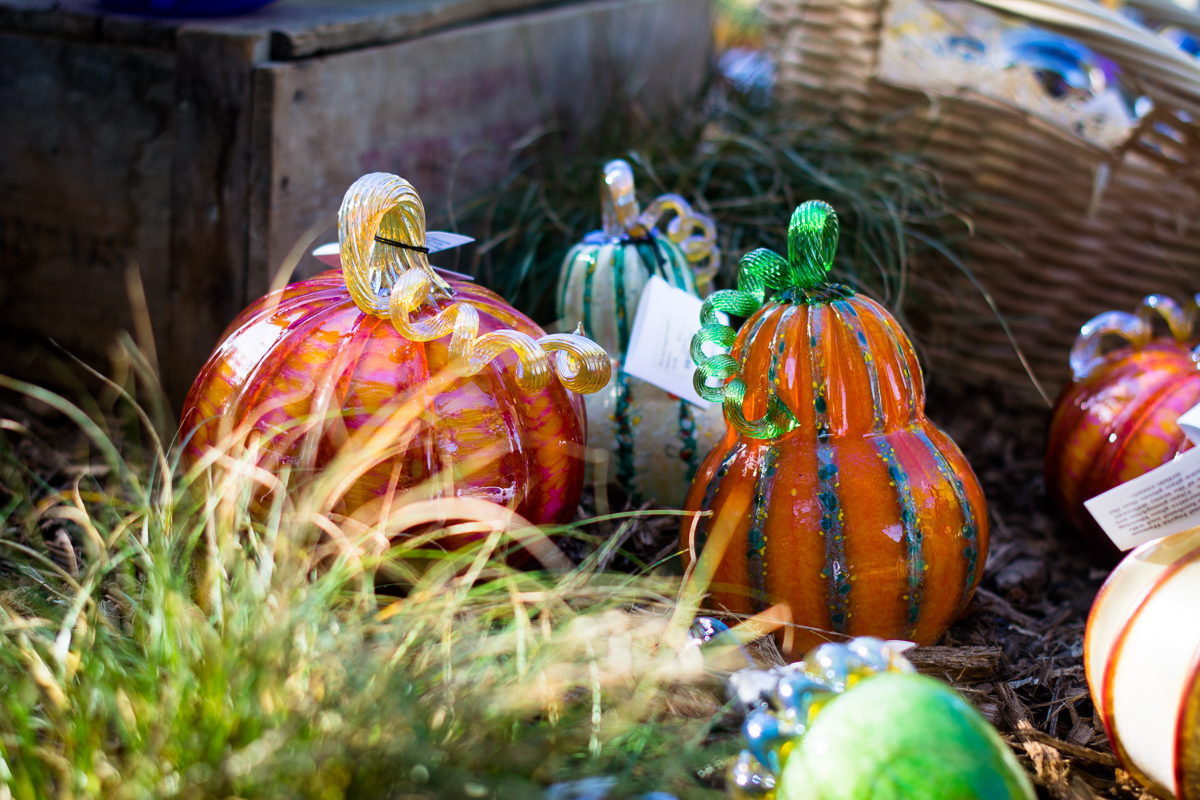 ScatterJoyPhotos_GreatGlassPumpkinPatch-8