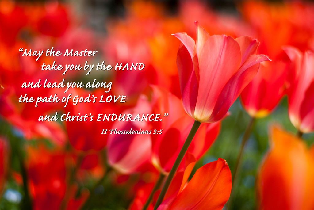 2Thessalonians3-5-tulips-XL