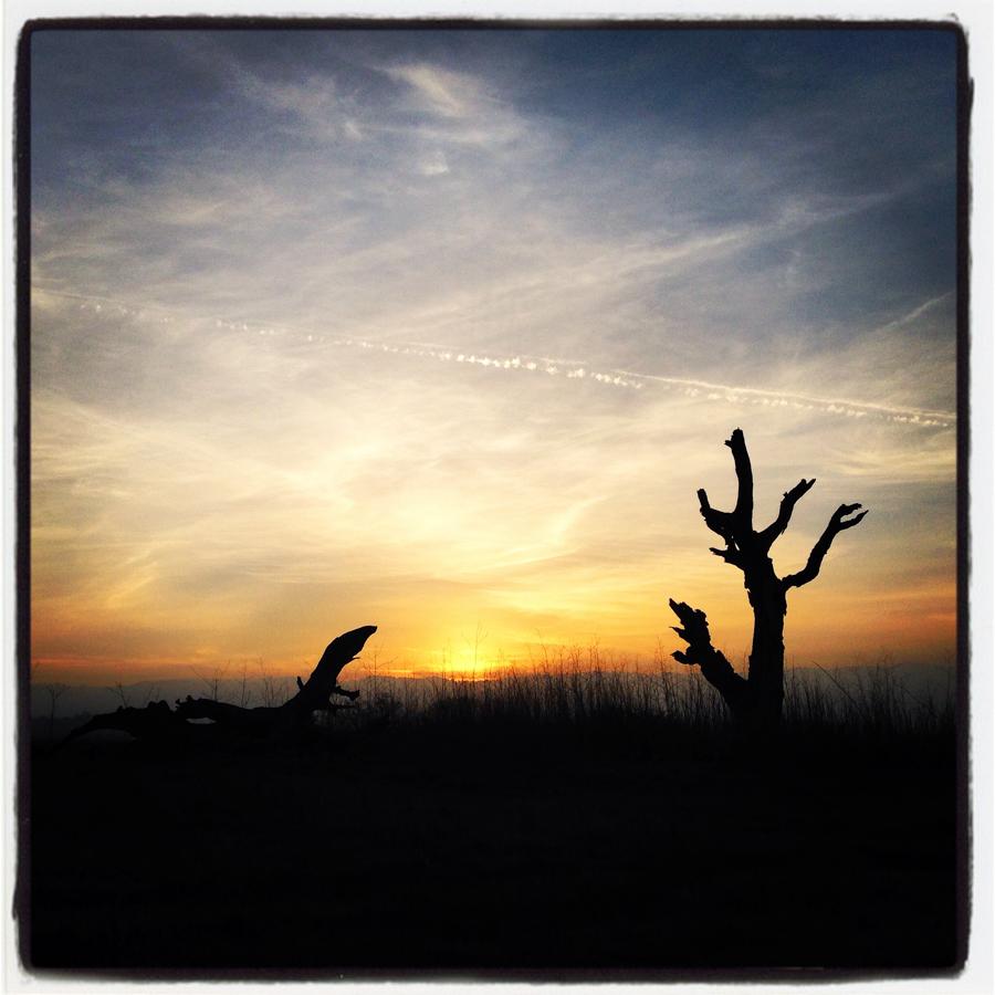 ScatterJoyPhotos_SkylineSilhouettes-e