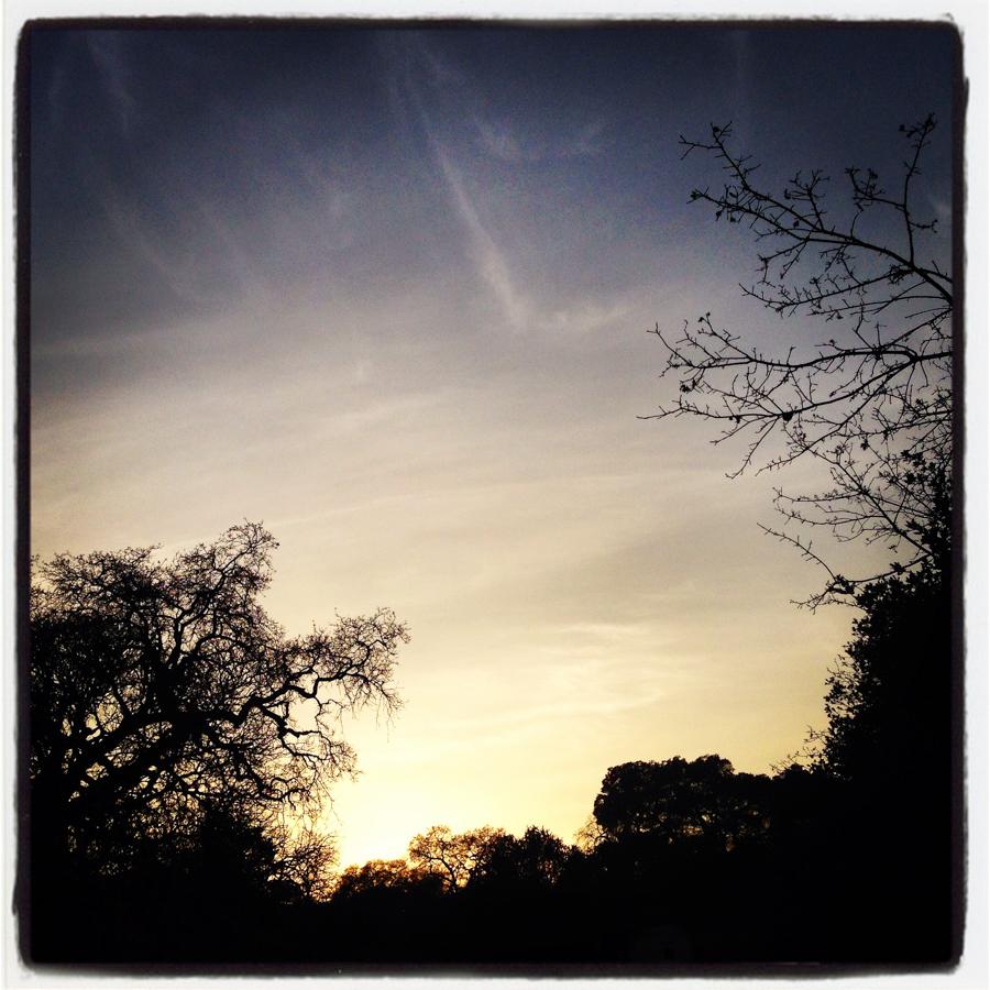 ScatterJoyPhotos_SkylineSilhouettes-g