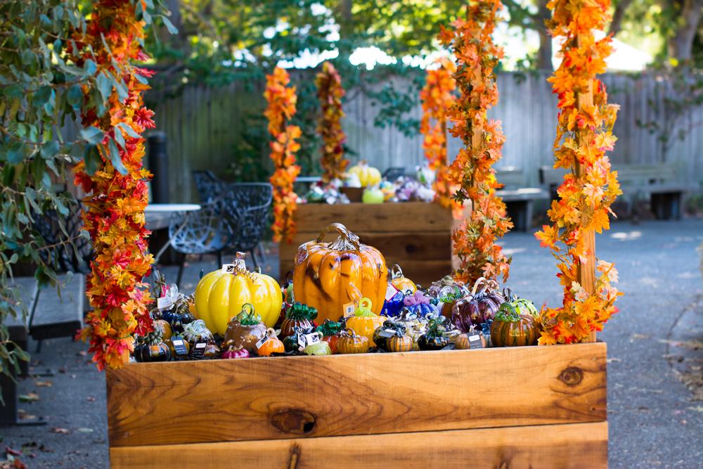 ScatterJoyPhotos_GreatGlassPumpkins10-2-15_6a