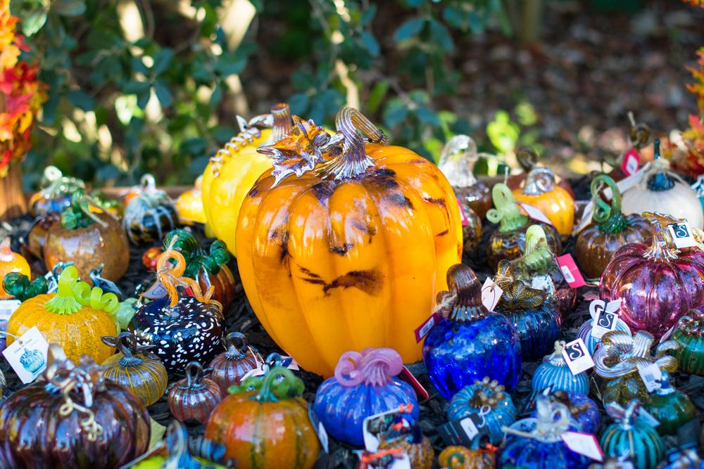 ScatterJoyPhotos_GreatGlassPumpkins10-2-15_6c