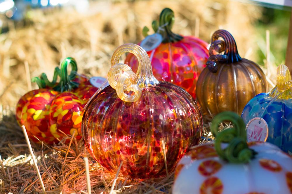 ScatterJoyPhotos_GreatGlassPumpkins10-2-15_7a