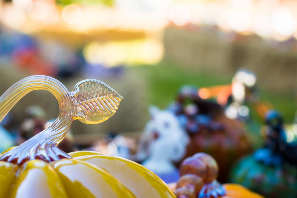 ScatterJoyPhotos_GreatGlassPumpkins10-2-15_8b