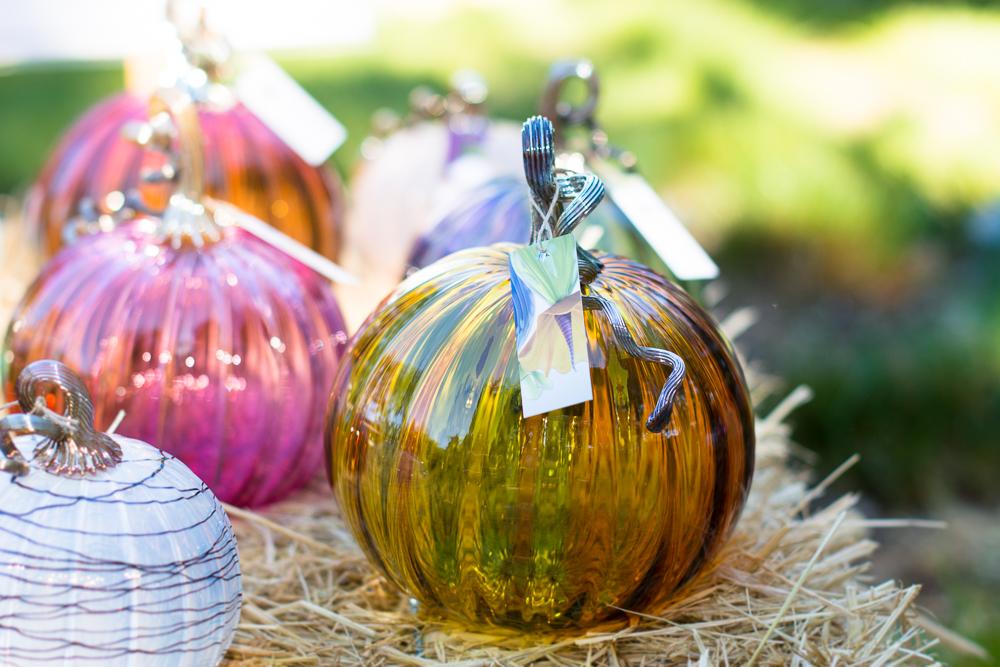 ScatterJoyPhotos_GreatGlassPumpkins10-2-15_8h