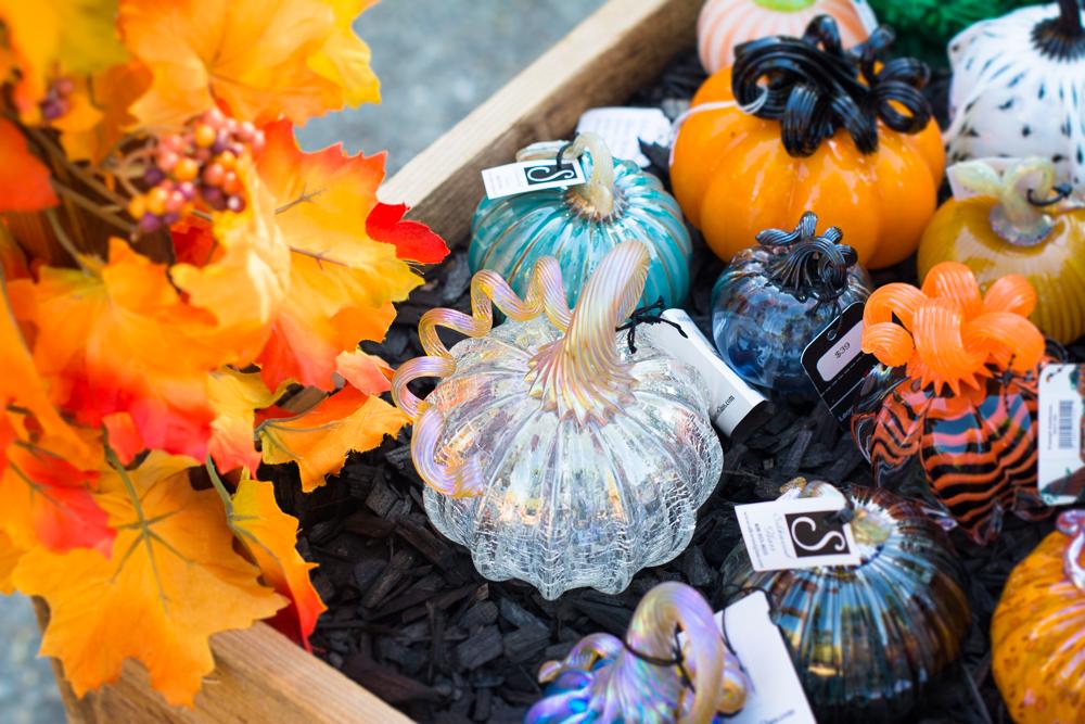 ScatterJoyPhotos_GreatGlassPumpkins10-2-15_9c